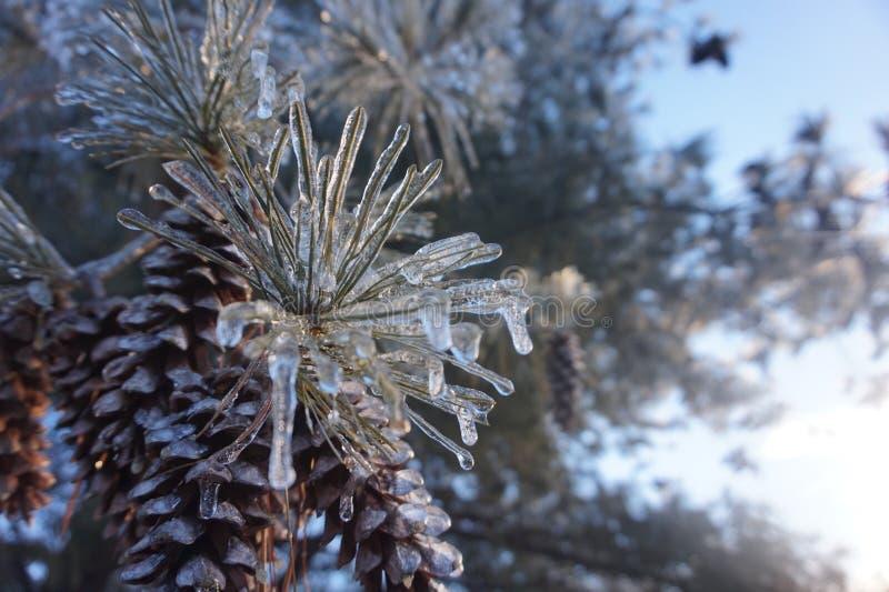 冻结结构树 库存照片