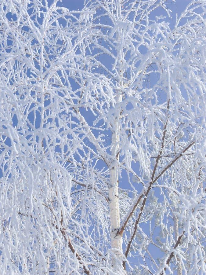 冻结结构树 图库摄影
