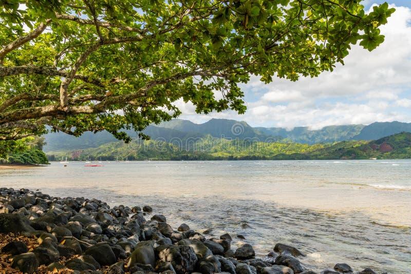 构筑多岩石的海滩的树在考艾岛,夏威夷 免版税库存图片