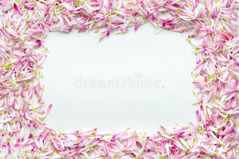 构筑雏菊的很大数量的瓣 图库摄影