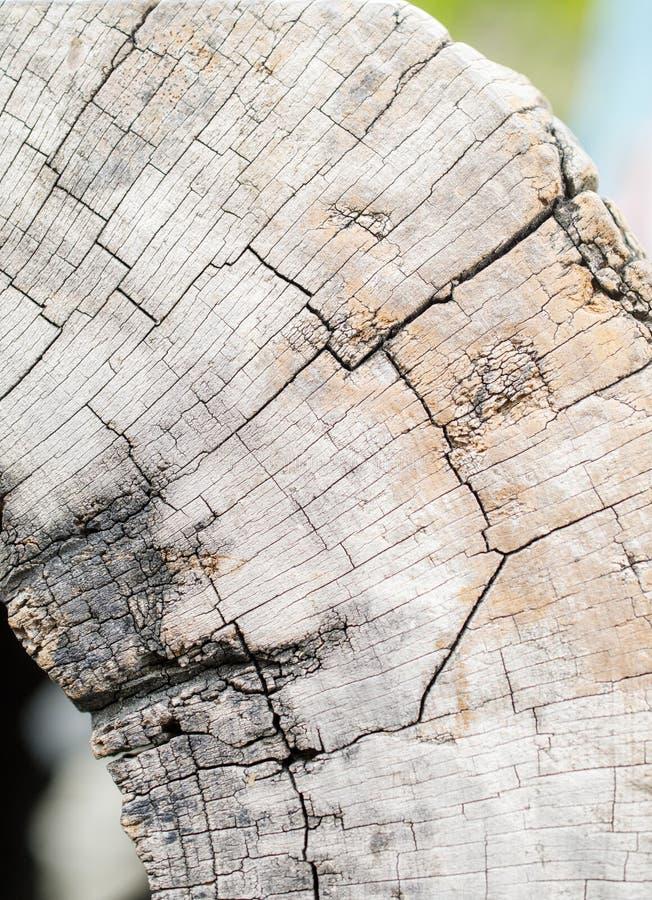 构造木头 图库摄影