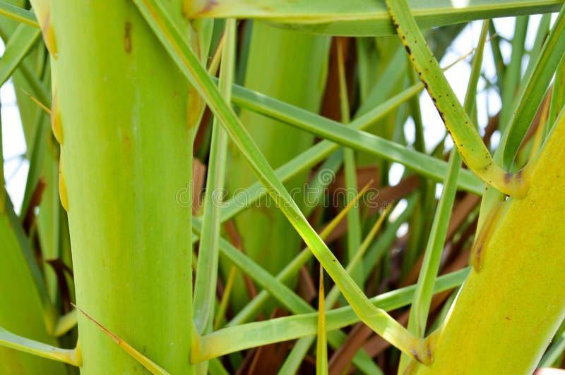 构造绿色交错的被交互相联的绿色新鲜的自然叶子热带棕榈树南密林异乎寻常的异常的抽象背景 图库摄影