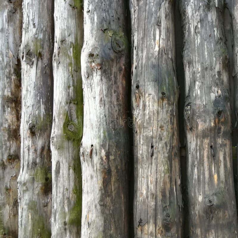 构造背景老日志/摘要灰色自然背景; 免版税库存图片