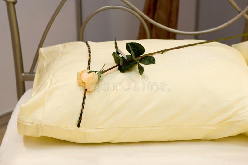 枕头玫瑰黄色 图库摄影
