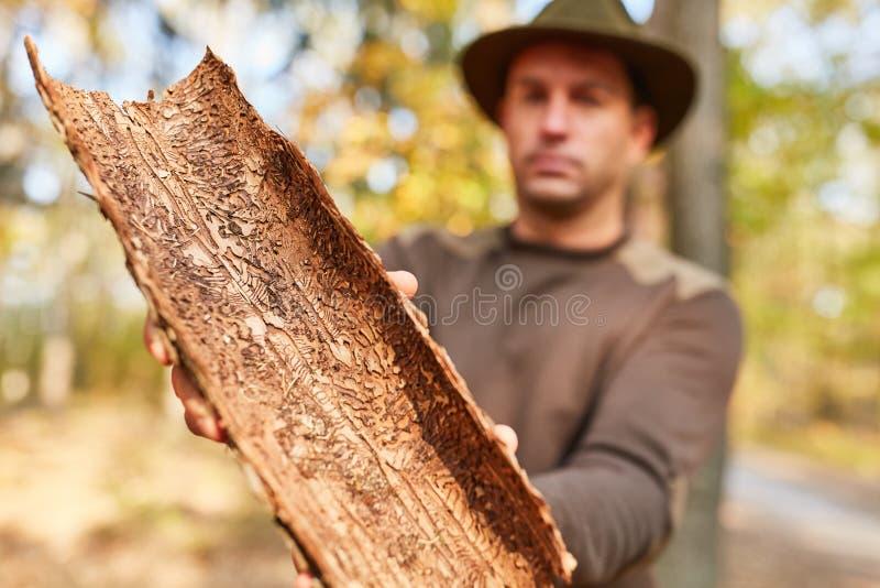 林业显示树皮以虫大批出没 库存照片