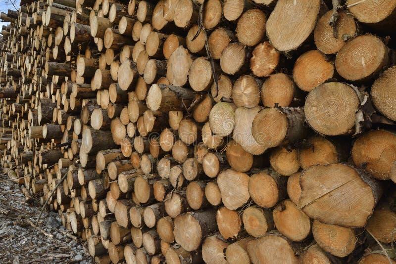 林业木材堆 免版税库存图片