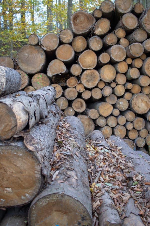 林业被堆积的树干 库存图片