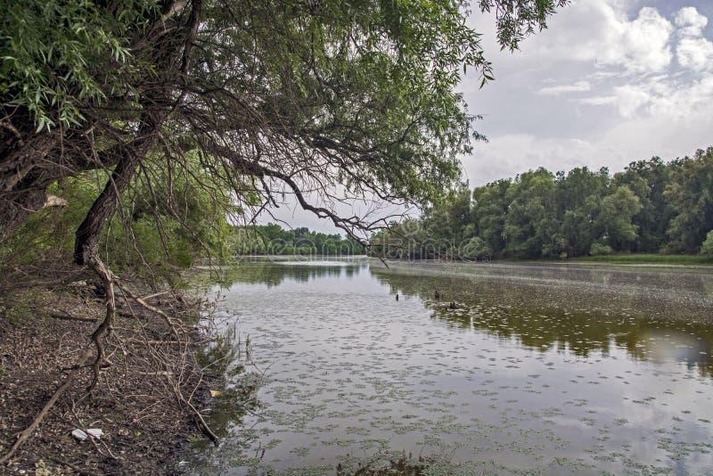 林中的湖 免版税图库摄影