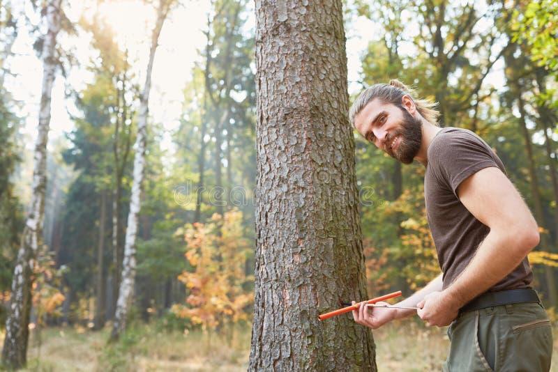 林务员以成长钻子测试树健康 免版税库存照片