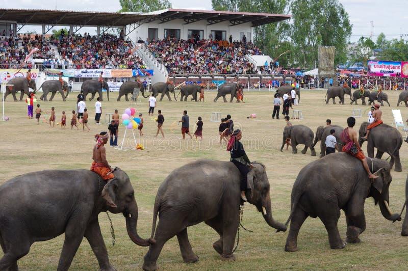 素林大象召集 库存照片