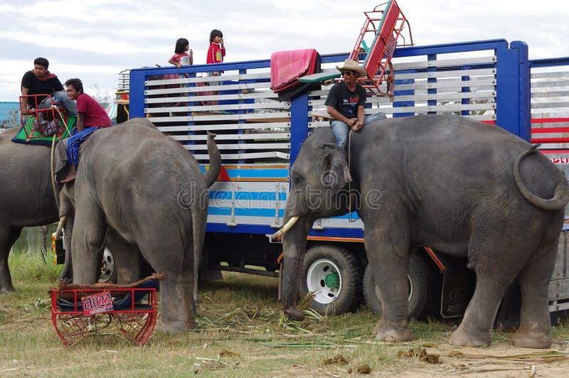 素林大象召集 免版税库存图片
