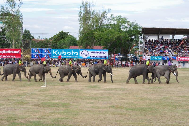 素林大象召集 图库摄影