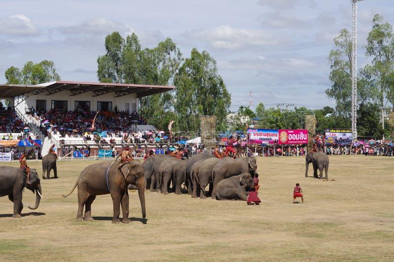 素林大象召集 库存图片