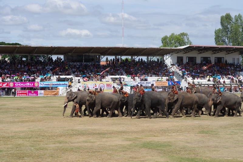 素林大象召集 免版税图库摄影