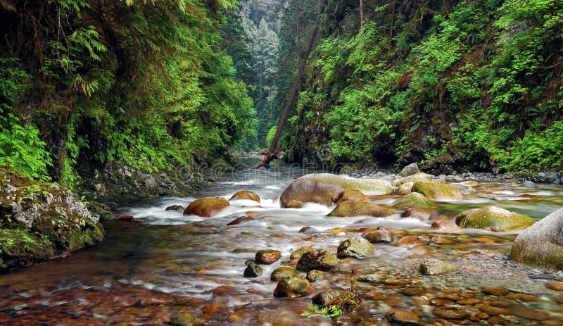 林恩峡谷小河 库存照片