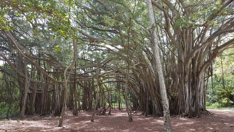 林木线 库存图片