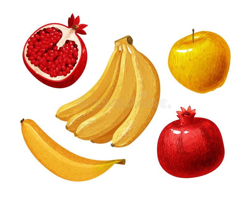 果子例如香蕉,苹果,石榴 也corel凹道例证向量 皇族释放例证