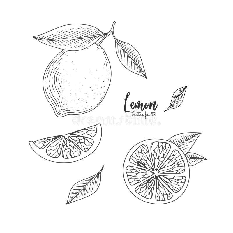 果子例证用仿照板刻样式的柠檬 菜单的手拉的元素,贺卡,包装纸 皇族释放例证
