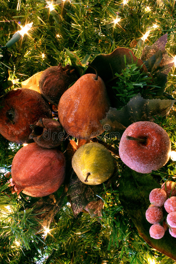 果子加糖了结构树 库存照片