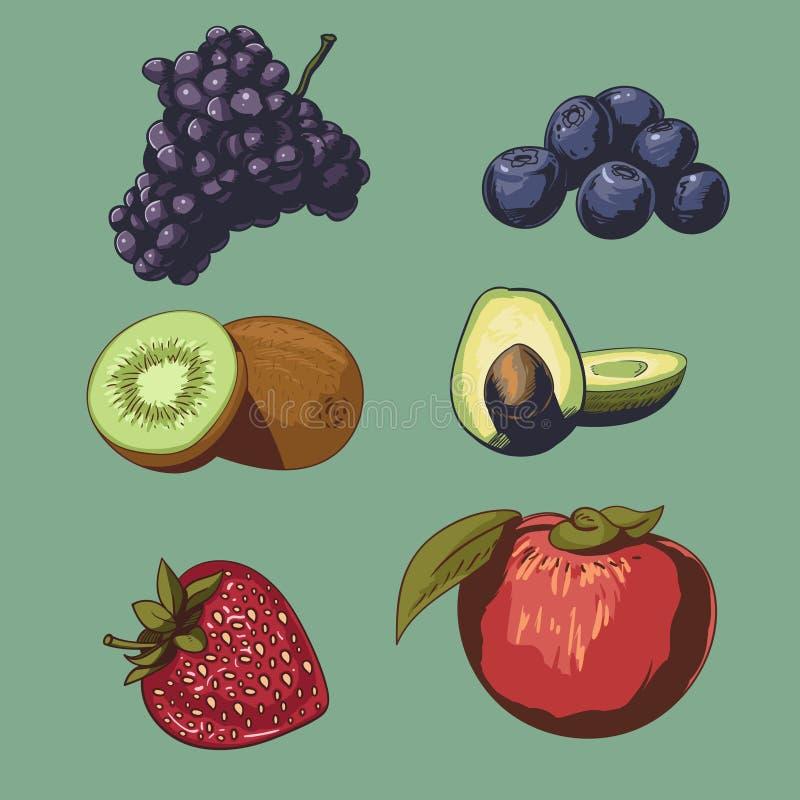 果子和莓果汇集传染媒介 库存照片