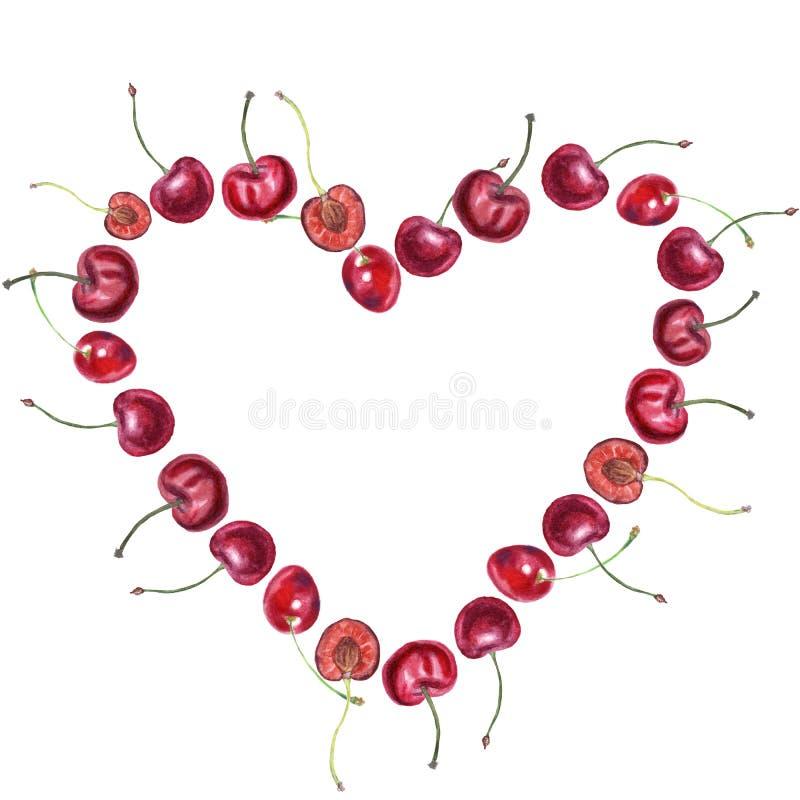 果子心脏 成熟樱桃绘与在白色的水彩 植物学例证 皇族释放例证