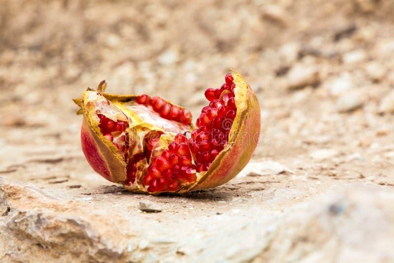 果子成熟水多的石榴种子 库存图片
