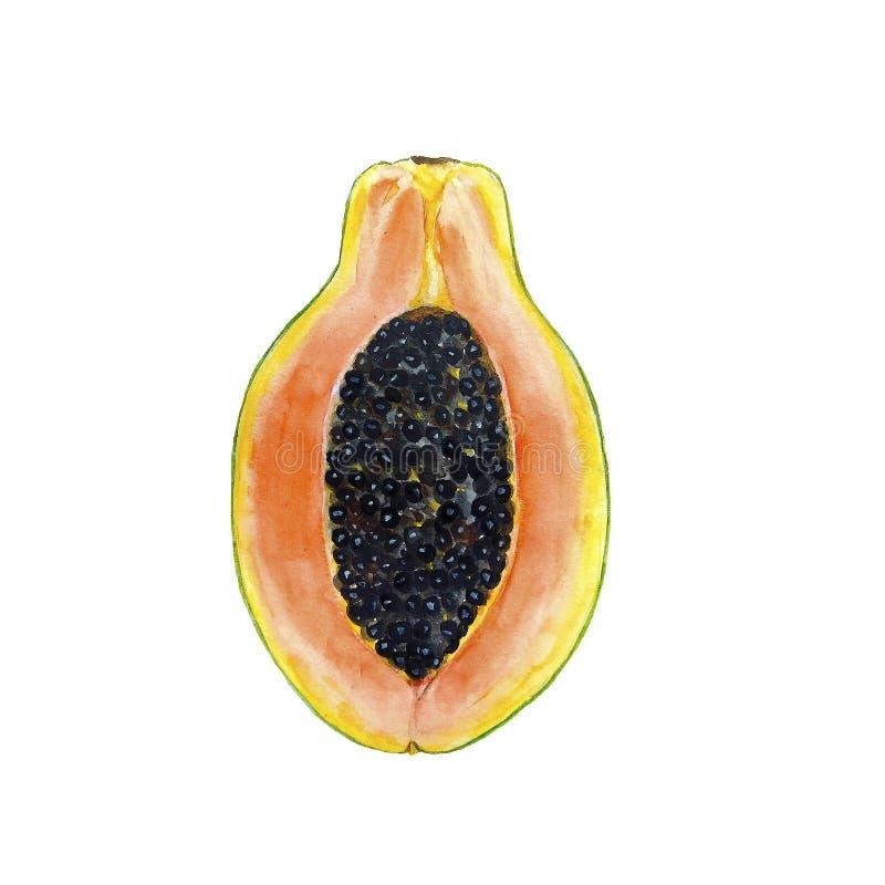 果子番木瓜水彩 库存例证