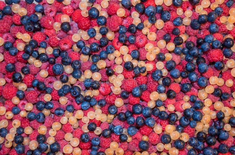 果子背景用蓝莓、莓和白色无核小葡萄干莓果 免版税库存照片