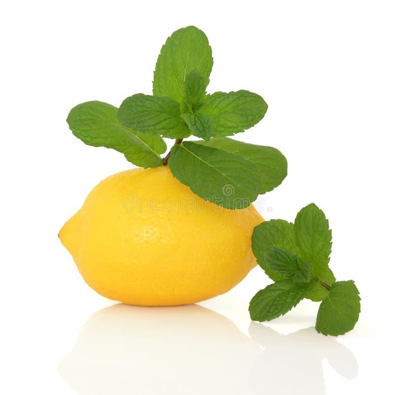 果子草本柠檬薄荷 免版税库存照片