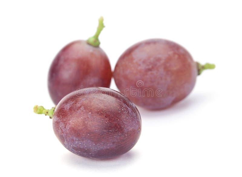 果子葡萄 库存照片