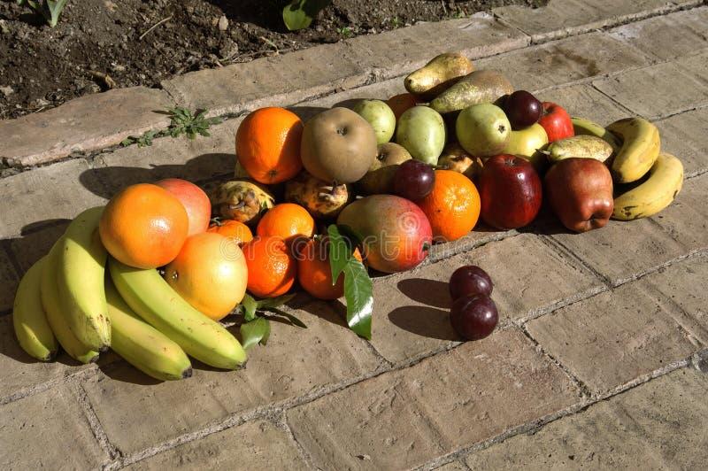 Download 果子静物画与阳光的 库存图片. 图片 包括有 健康, 外面, 李子, 食物, 橙色, 保护, 烹调, 阳光 - 59102463