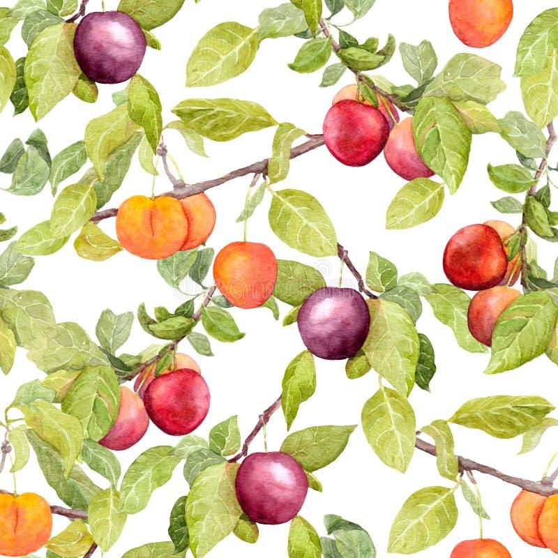 果子-李子,樱桃,苹果 葡萄酒无缝的自然样式 水彩 皇族释放例证