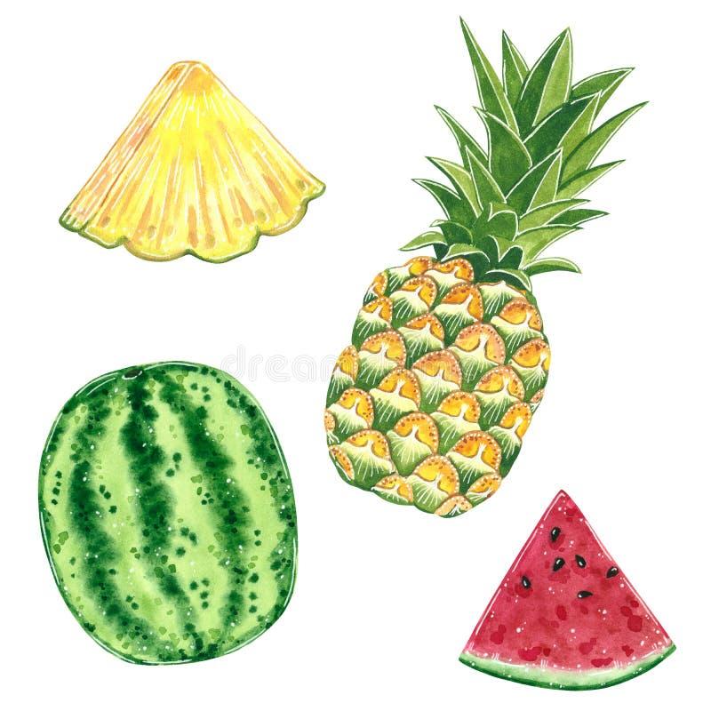 果子clipart集合 菠萝和西瓜,水彩例证 向量例证