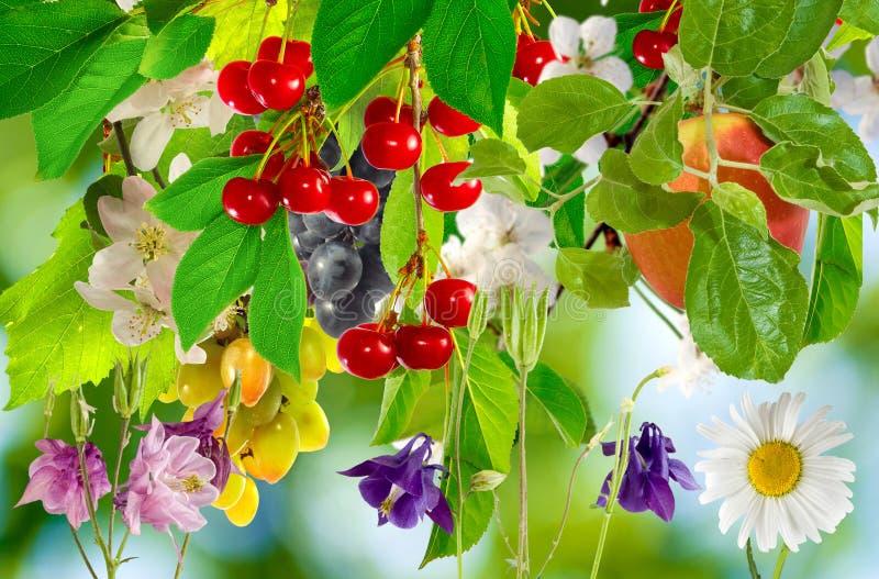 果树和花在庭院里 库存照片