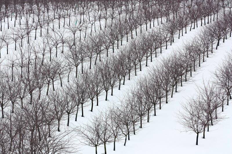 冬天果树园 库存图片