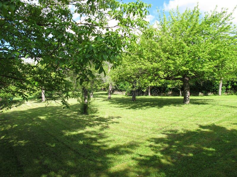 果树在草甸 库存图片