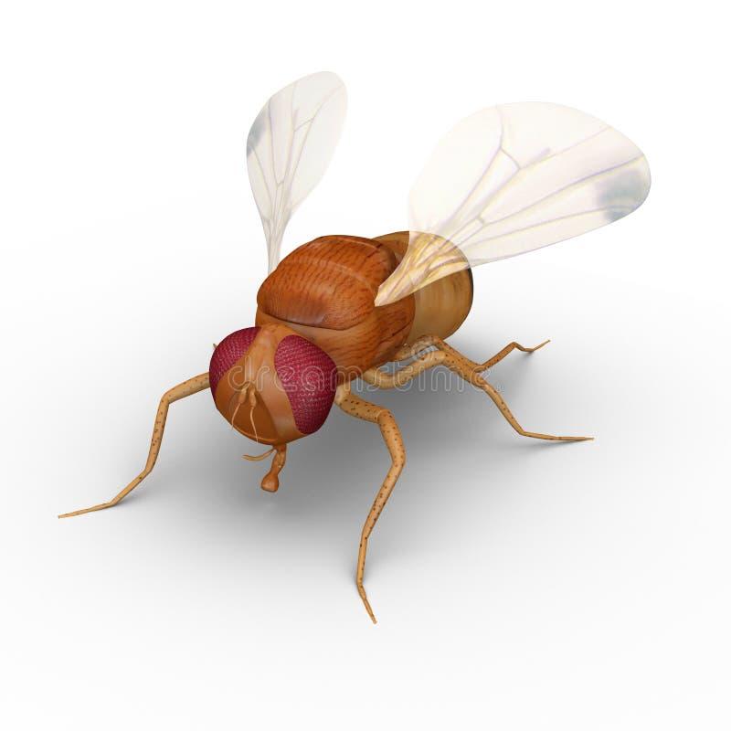 果蝇 库存例证
