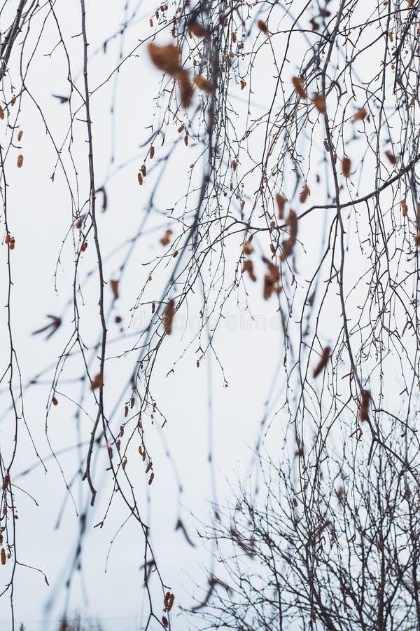 枝杈分支冬天冷的棕色灰色天空沈默平静 库存图片