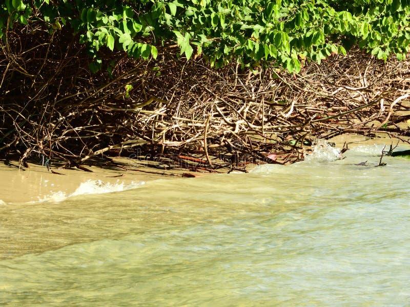枝杈和植被 图库摄影