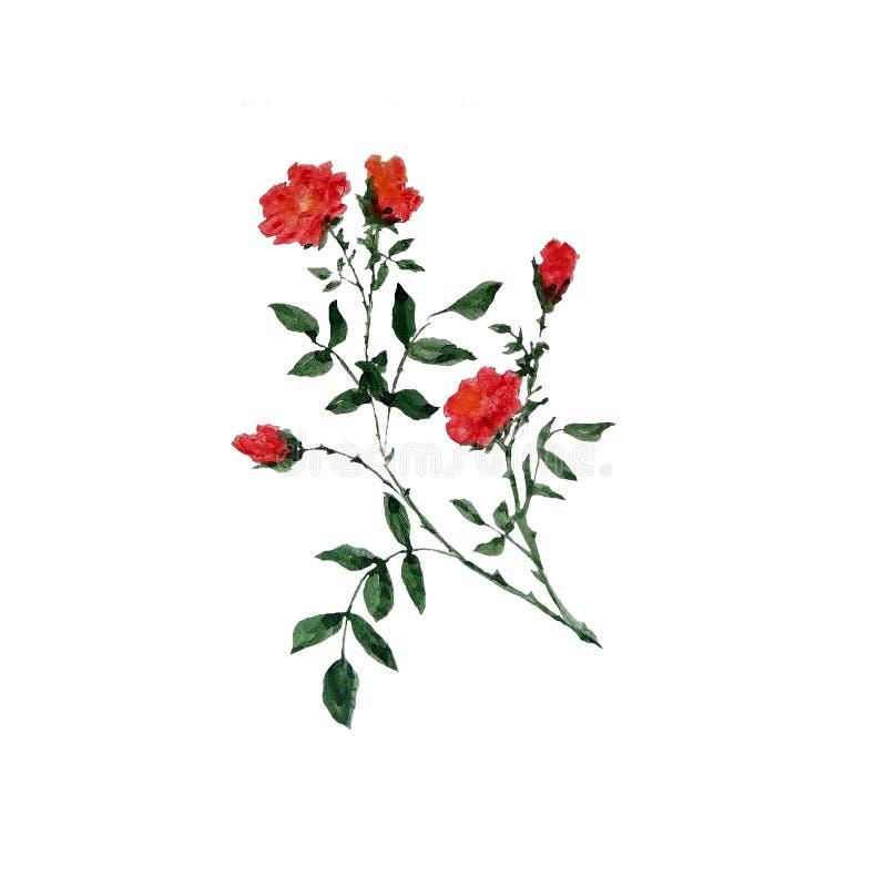 枝杈的水彩例证有绿色叶子和红色小花的 向量例证