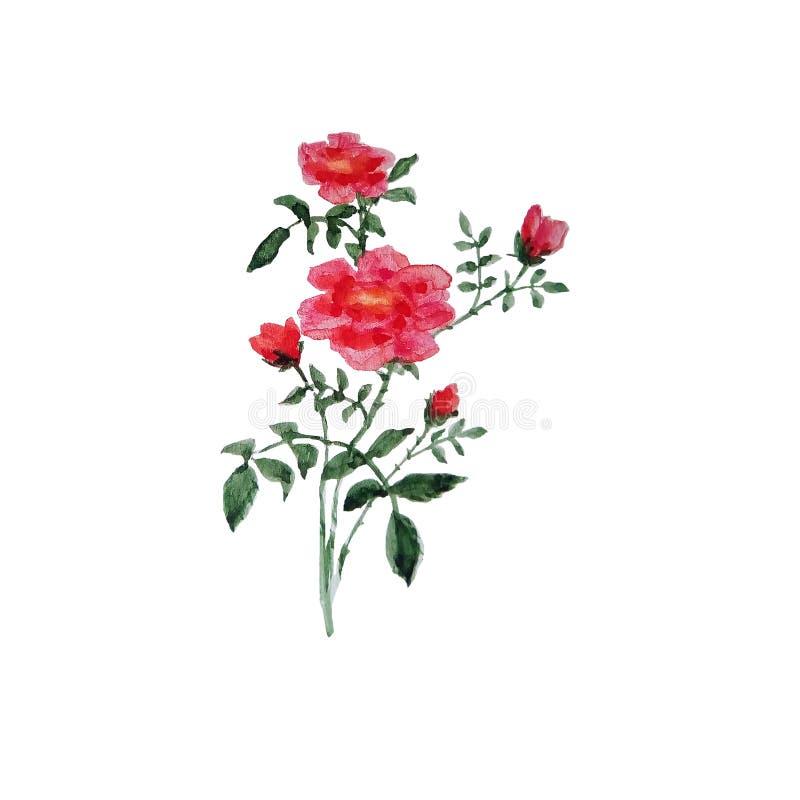 枝杈的水彩例证有绿色叶子和红色小花的 皇族释放例证