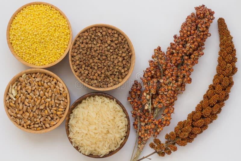 枝杈红色小米和高梁,五谷荞麦,小米,米 免版税库存图片