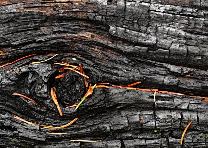 枞松针被烧焦的木头  图库摄影