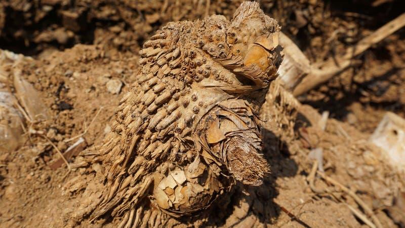 枯竹根织,自然 库存图片