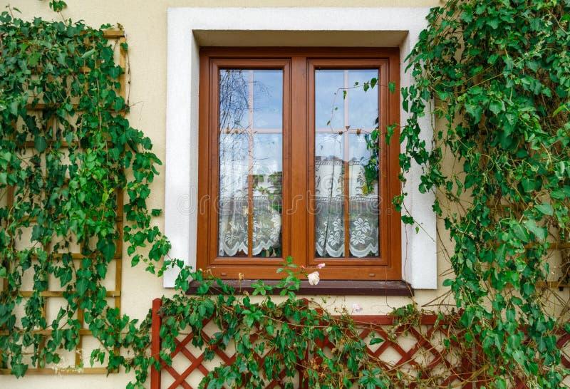 枯萎的常春藤surronded的窗口 库存图片