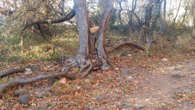 枯萎的结构树 免版税库存照片