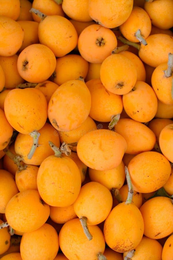 枸杞许多果子  免版税图库摄影