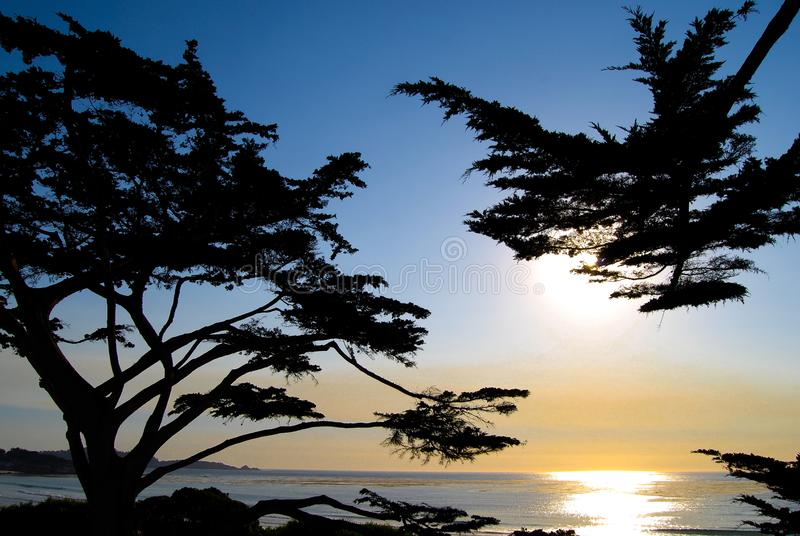 柏树在日落的加米奥加利福尼亚海滩 免版税库存图片