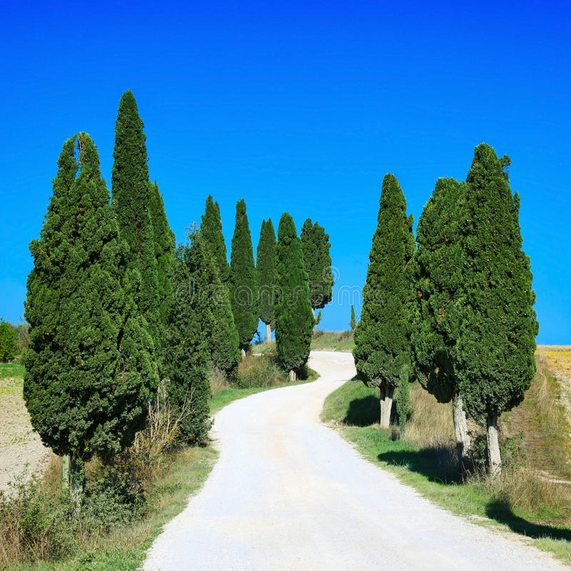 托斯卡纳,柏树白色弯曲了路农村风景,意大利,欧洲 免版税图库摄影