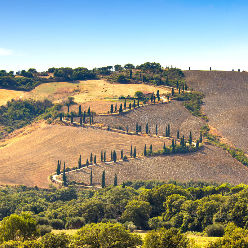 柏树风景路在锡耶纳,托斯卡纳,意大利附近的皮恩扎。 免版税库存图片